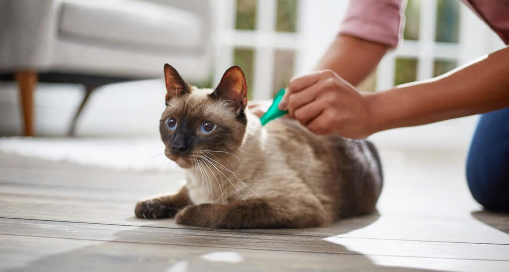Topical Flea and Tick Application to Cat