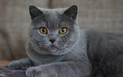 10 Senior Cat Care Tips