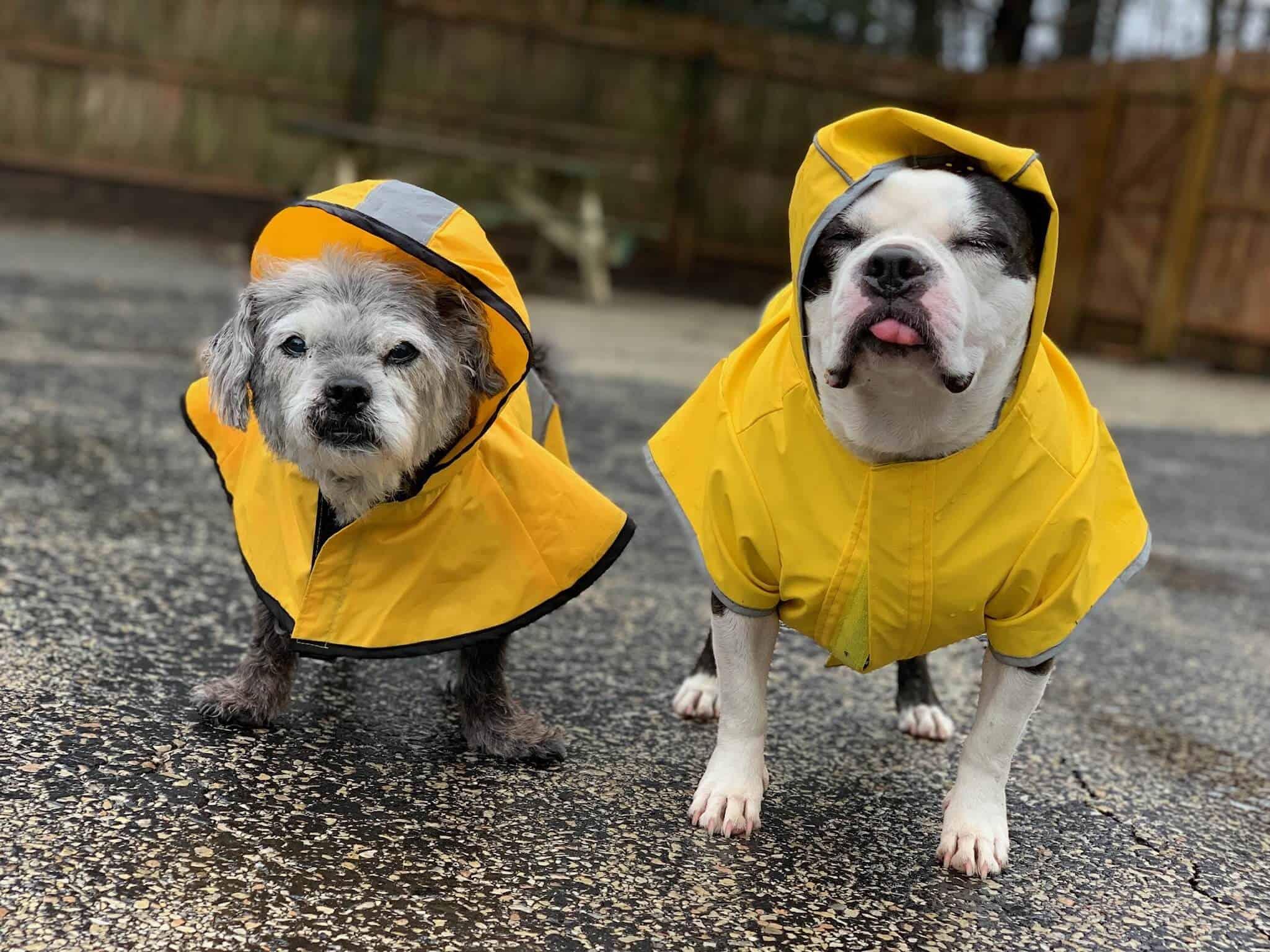 Rainy day at Doggy Daycare