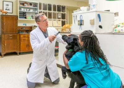 Dr. Rowan Sitting on Floor & Examining a Black Dog
