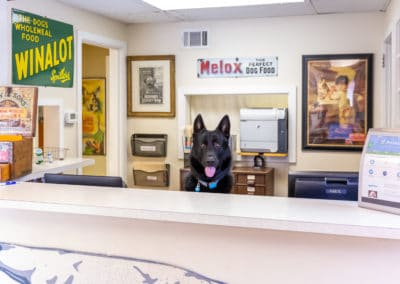 Dr. Rowan's Dog, Hans at Reception Desk
