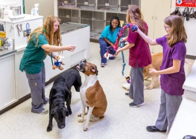 Kennel assistants with Doggy Daycare crew