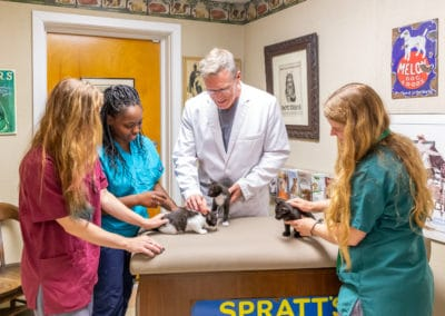 Dr. Rowan Checking a Litter of Kittens