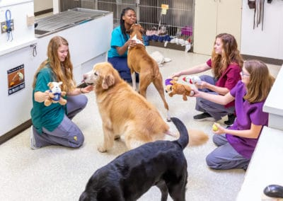 Dog Play Time with Hospital Staff