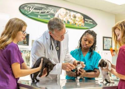 Dr. Rowan examines a cats skin