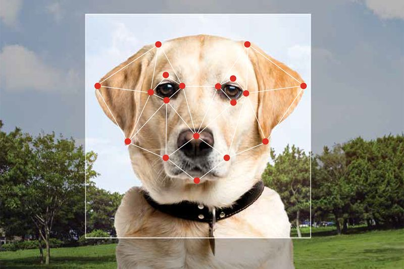Dog Facial Recognition Technology