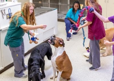 Dog Indoor Playtime with Nurses