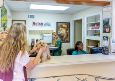Paoli Vetcare Reception Area
