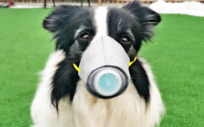 Can Your Pet Give You Coronavirus?