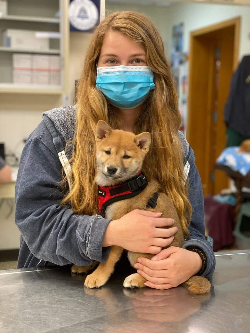 Assistant Kim holds a Shiba Inu