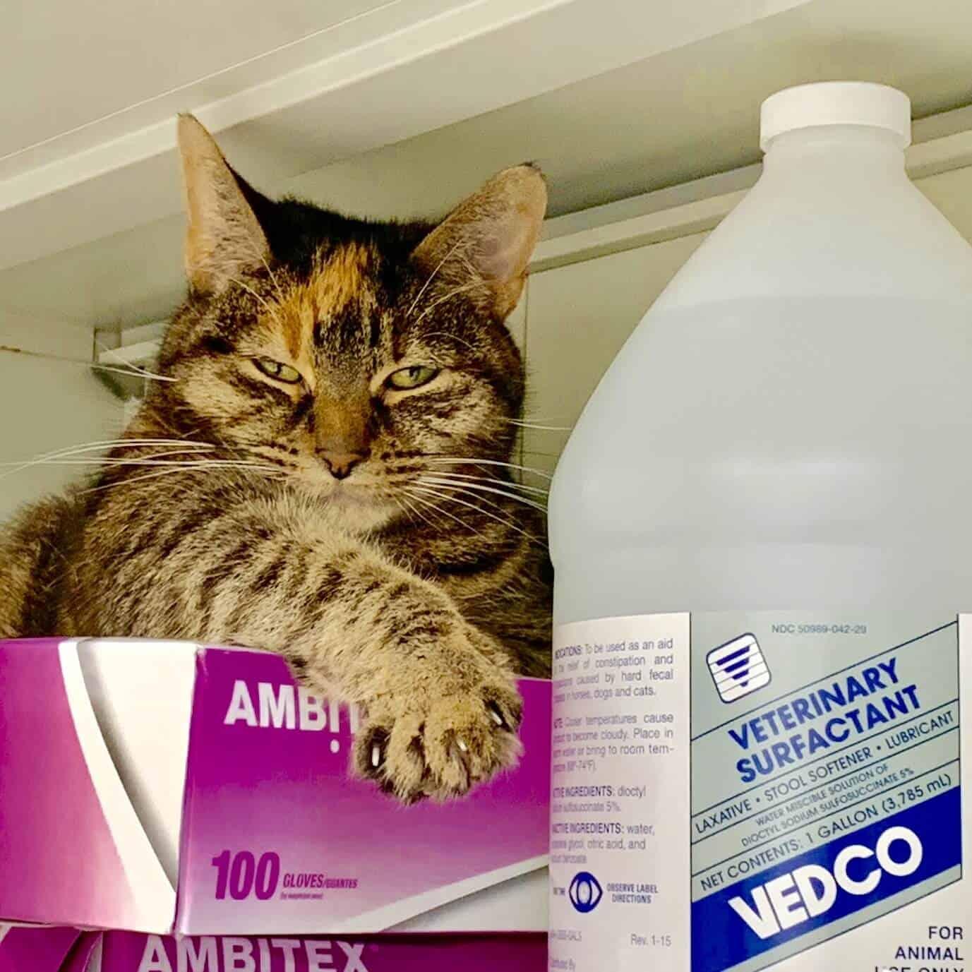 Cat vet hospital
