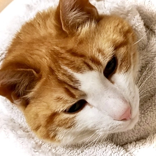 dog or cat hospice, euthanasia, cat or dog cremation
