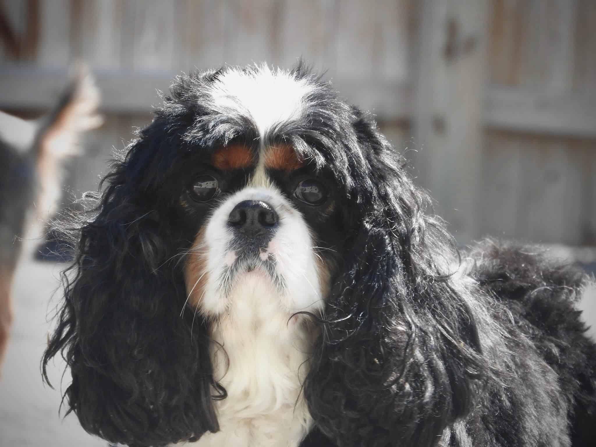 doggie daycare berwyn, pa