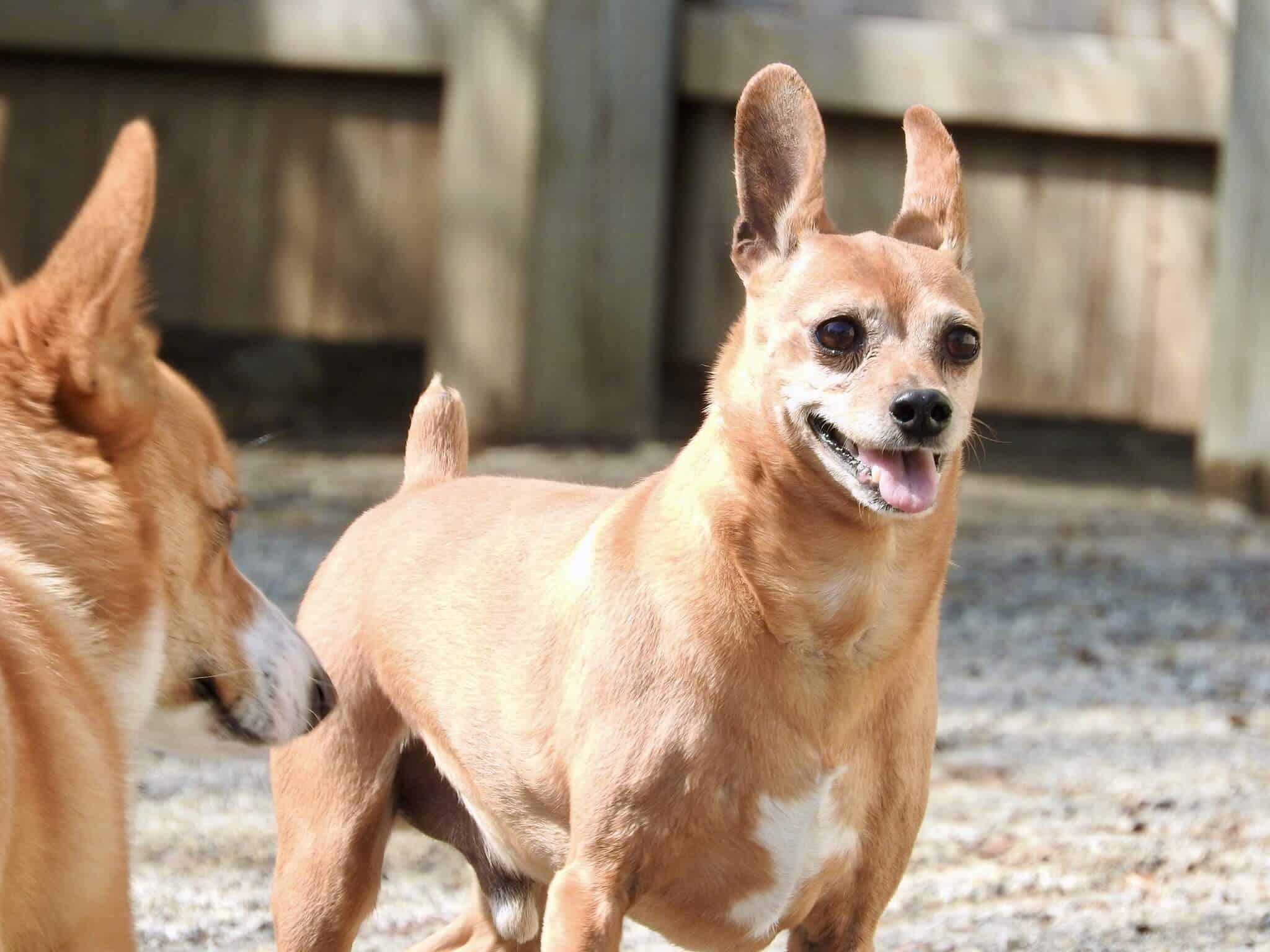 Dog boarding kennel Radnor PA