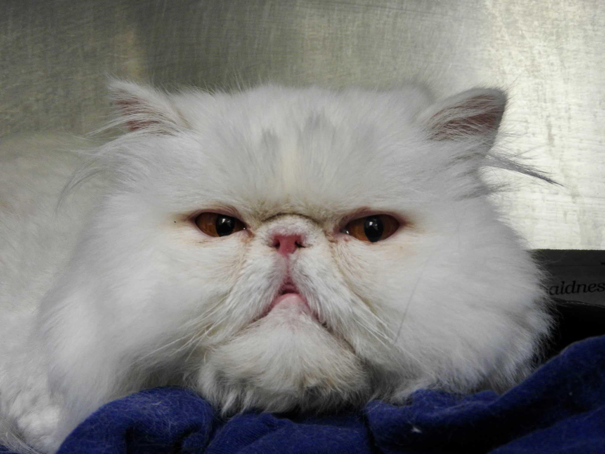 cat vet West Chester, PA