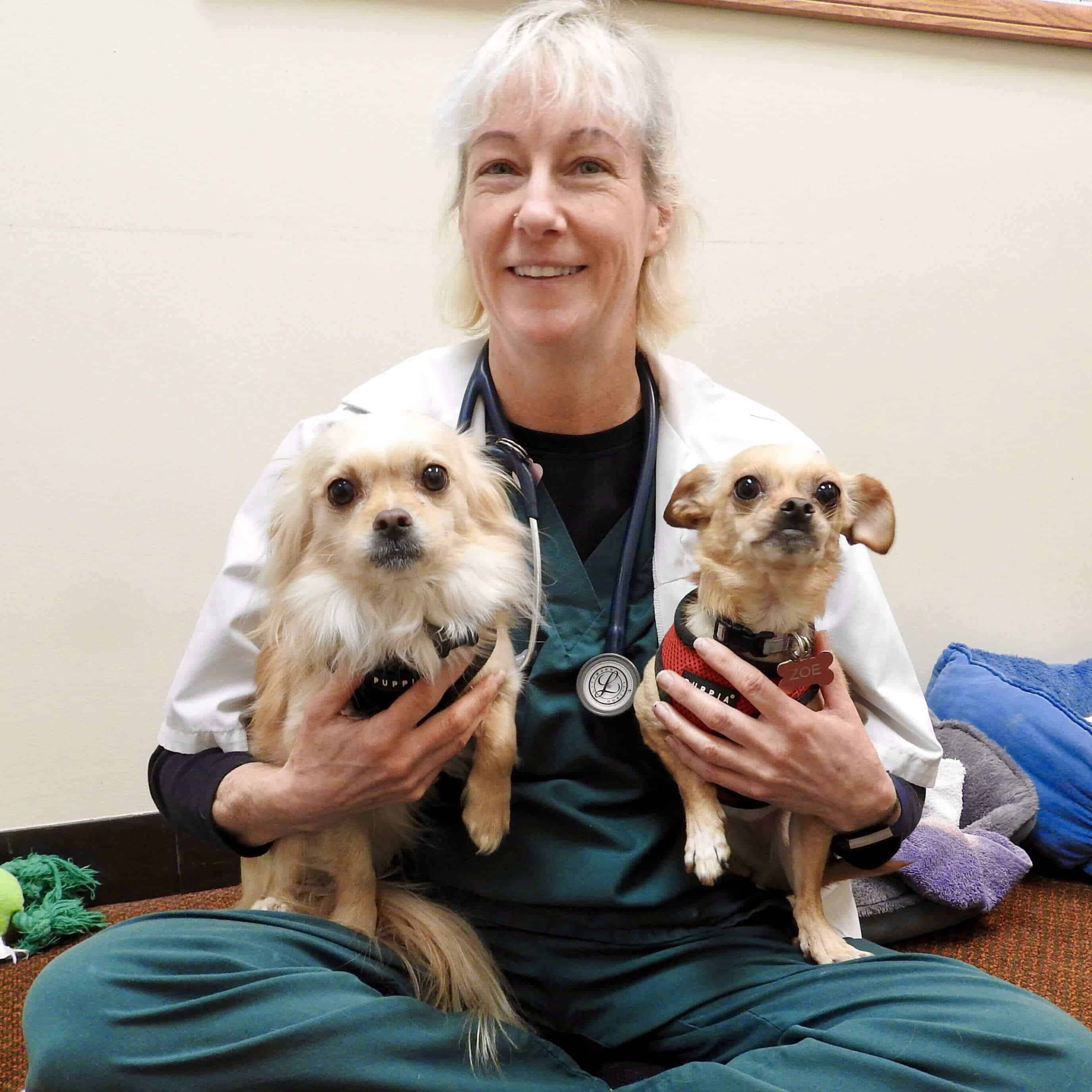 Lady Vet with Two Dogs