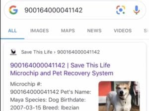 google a Lost Pet
