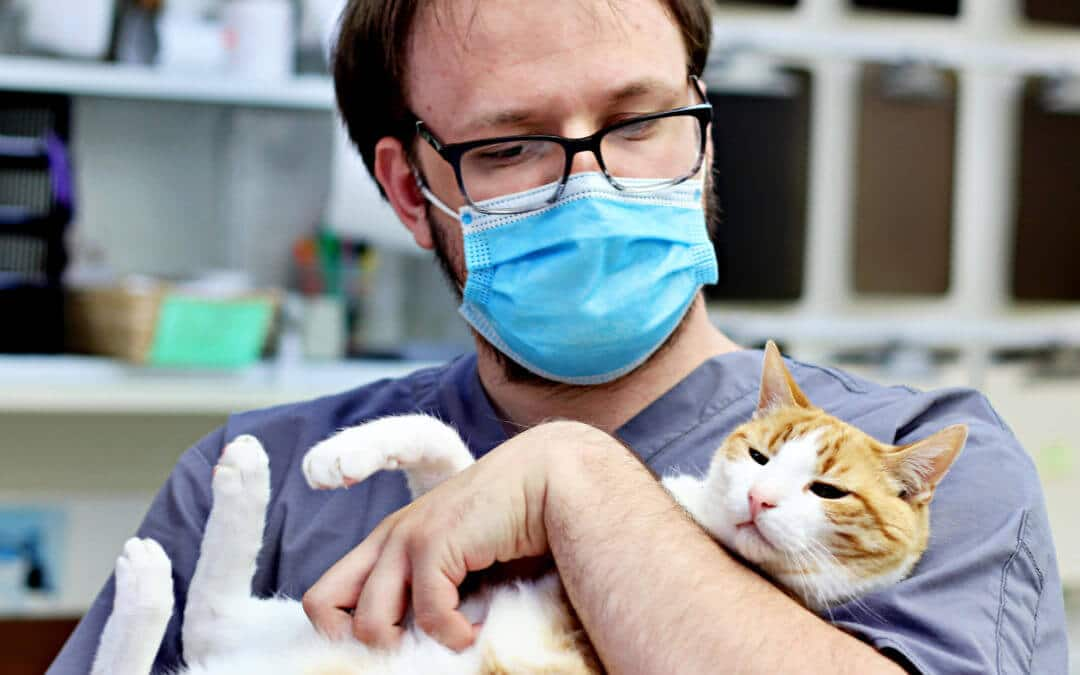 Financial Assistance for Pet Surgery and Vet Care