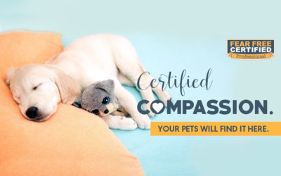 """Fear Free® Certified Vet — We're Here To Take The """"Pet"""" out of """"Petrified!"""""""