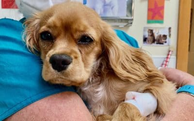 Big Secret Revealed — How Much Does It Cost To Neuter A Dog At A Vet?