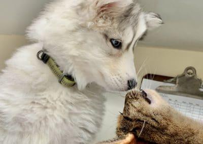 Best Puppy and Kitten Vet