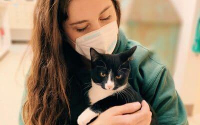 Paoli Vetcare Cat Boarding Service